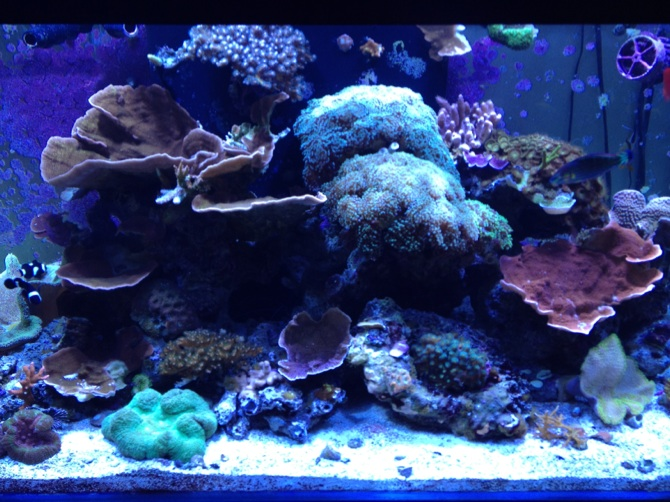 120g mixed reef tank